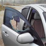 Ограбление через разбитое стекло