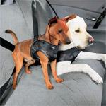 Ремни безопасности бывают даже для четвероногих пассажиров