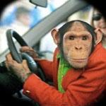 Опасный водитель
